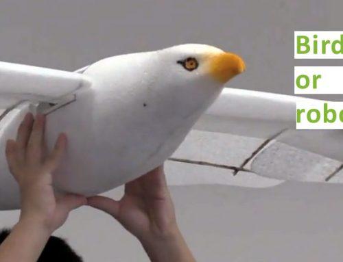 A Bird or a Robot? Mind-blowing video!