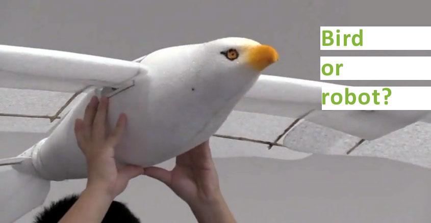 Biomorphic Robotic Bird