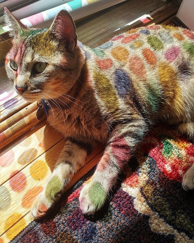 What a colorful cat
