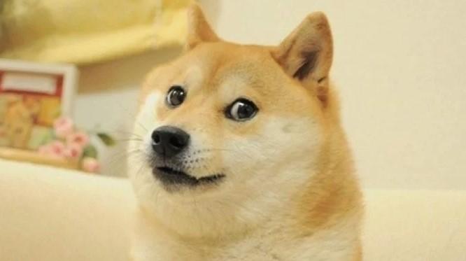famous doge meme most popular meme of the decade